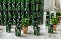 Green Cola: s-a lansat o noua bautura doar din ingrediente naturale