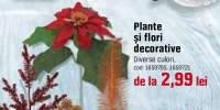 Pante si flori decorative