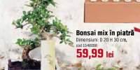 Bonsai mix in piatra
