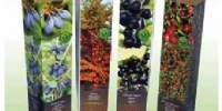 Arbusti medicinali