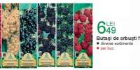 Butasi de arbusti fructiferi