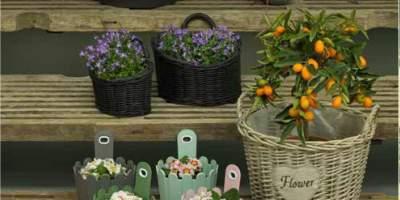 Reducere intre 30-60% la toate ghivecele de flori!