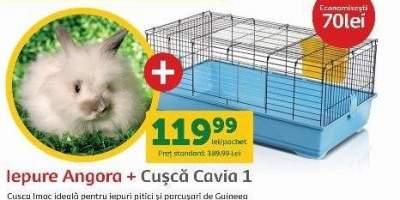 Iepure Angora + Cusca Cavia 1