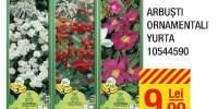 Arbusti ornamentali Yurta