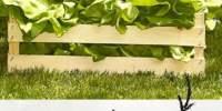 Salata verde Gusturi Romanesti