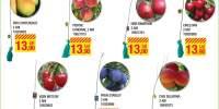 Pomi fructiferi 2 ani