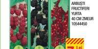 Arbusti fructiferi Yurta