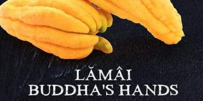Lamai Buddha's Hands