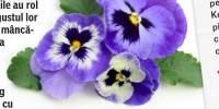 Flori comestibile