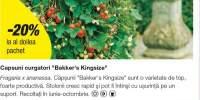 Capsuni curgatori Bakker's Kingsize