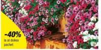Petunii curgatoare cu flori mari Surprise