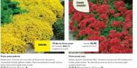 Floare grasa galbena/ rosie