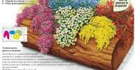15 plante pentru ghivece si jardiniere