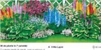 30 de plante in 7 varietati