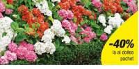 Mix de hortensii pentru gard viu