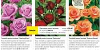 3 trandafiri pentru buchete