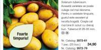 Cartofi Eerstelingen