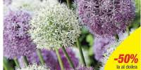 Mix Allium Fantasia