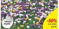 Mix de branduse cu flori mari